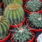 series of potted cactus for sale at the market of florists