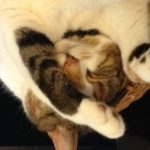 Brain Healthy Tips From The Cat