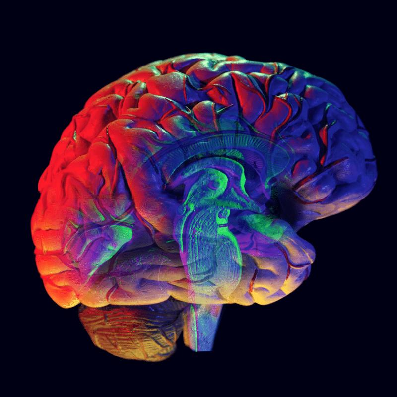 5 Ways Cannabidiol (CBD) Can Boost Your Brain