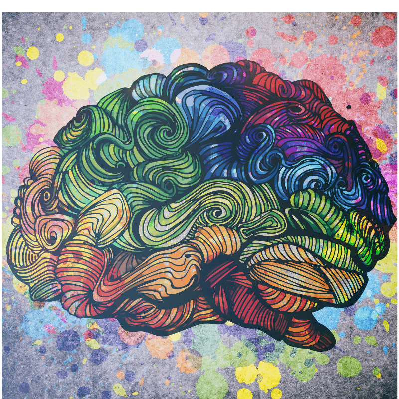 What Your Brain Needs to Know About Neuroplasticity